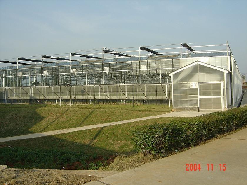 Buy Greenhouse Glass Online