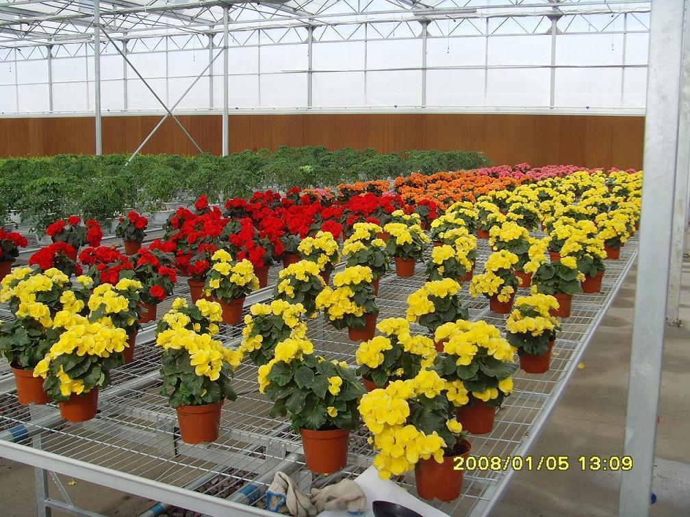 Flower-growing Greenhouse - LPC9.6Ss4 - Ruihua (China ...