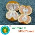 Mandarin Orange 2