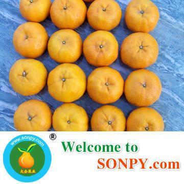 Mandarin Orange 4