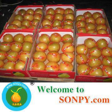 Chinese Honey Pomelo 4