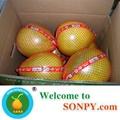 Chinese Honey Pomelo 5