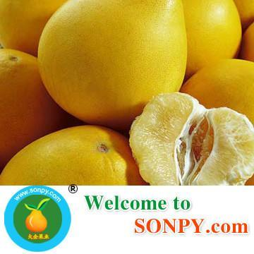 China Pomelo Fruit 2