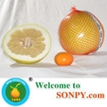 China Pomelo Fruit 4