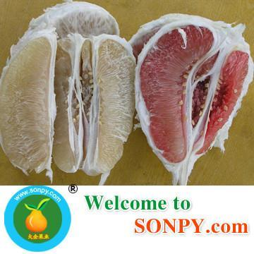 China Pomelo Fruit 5