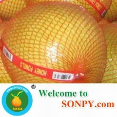China Pomelo