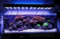 Cheap Waterproof Flexible LED strip light for aquarium 453nm blue color 1