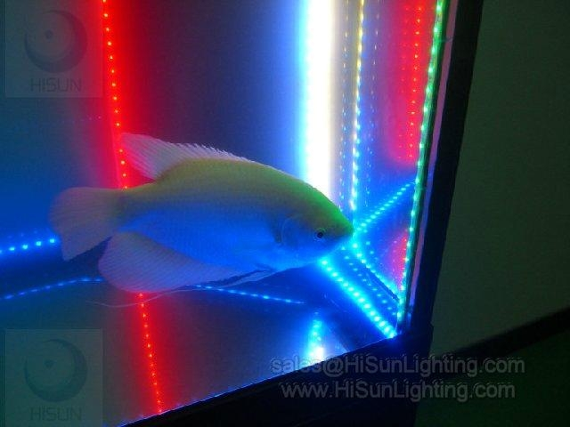 Cheap Waterproof Flexible LED strip light for aquarium 453nm blue color 3