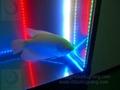 Cheap Waterproof Flexible LED strip light for aquarium 453nm blue color 3