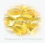 DHA冬化油(二十二碳六烯酸)