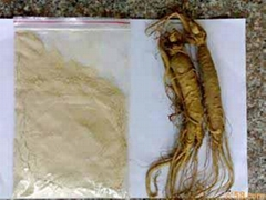 Ginseng Extract / Ginseng Powder