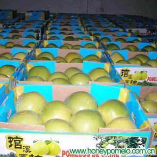 fresh pomelo 3