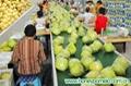 fresh citrus fruit 2