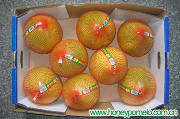 citrus fruit 2