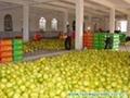 pomelo fruit 3