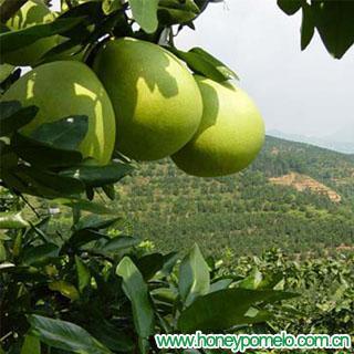 fresh citrus fruit 1
