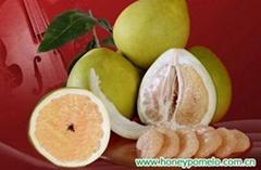 china pomelo fruit
