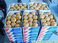 fruit juice 1