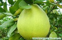 fresh fruit 1