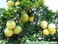 fresh fruit 2