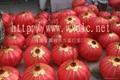 喜慶燈籠 1
