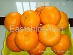 Mandarin orange (Orange, Fruit)