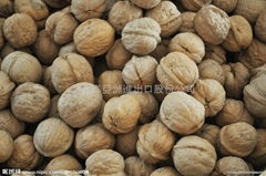 Walnut import clearance