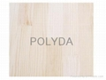 Paulownia Finger Jointed Board;