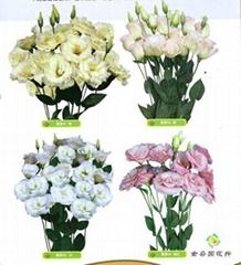 Flowers Kunming