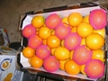 valencia orange 2