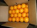 valencia orange 3