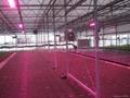 led grow light for plant growth