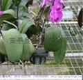 温室苗床网 4