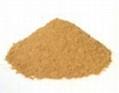 Coleus forskohlii extract Forskolin