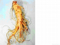 Ginseng Root Extract 80% Ginsenosides