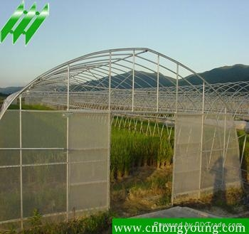 Economical Tunnel Greenhouse 3