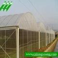 Muti-Span Plastic Greenhouse