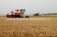 郑麦9023小麦种子