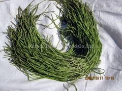 邳州貢菜苔干