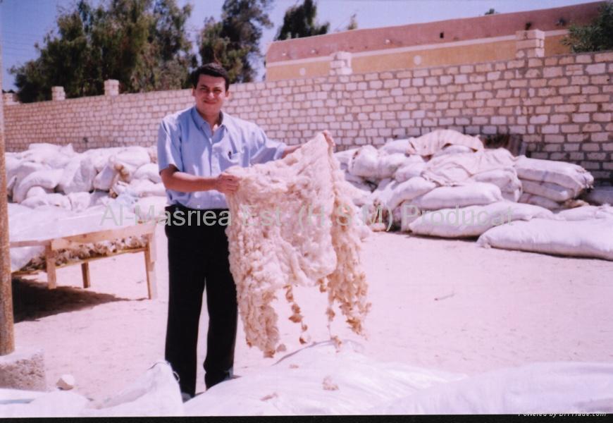 Sheep Wool (Greasy & Washed) 1