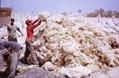 Sheep Wool (Greasy & Washed) 2
