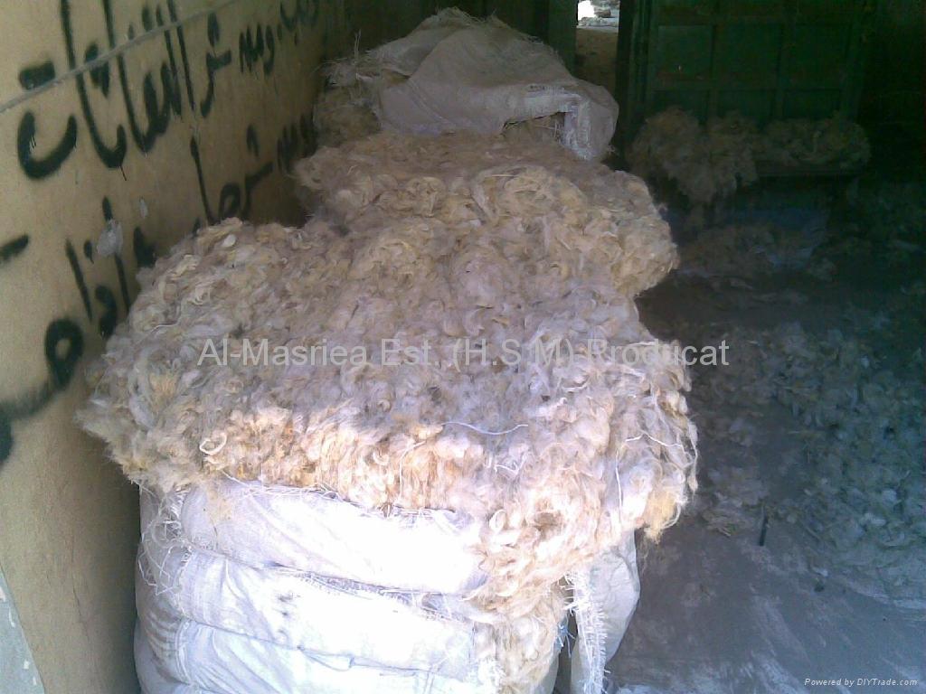 Sheep Wool (Greasy & Washed) 3