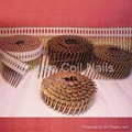 Discount Coil Nails China  3