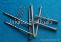 Bull Nails China manufacturer 3