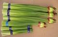 garlic sprout 1