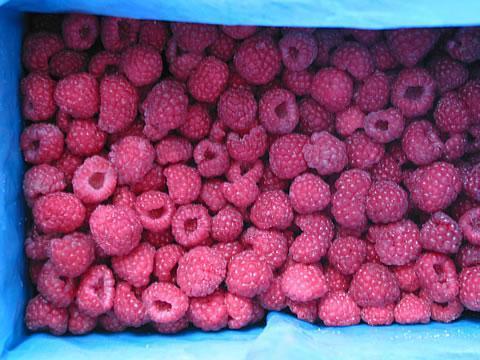 feozen red lingonberry 1