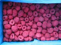 feozen red lingonberry
