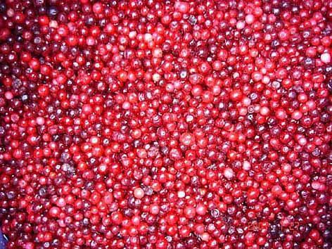 IQF lingonberry 1