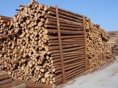 天津绿化用杉木小杆