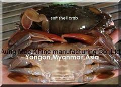 frozen soft shell crab(s